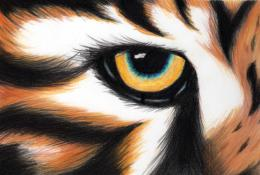 Tiger\'s eye by SonidoEspektral on DeviantArt 1826