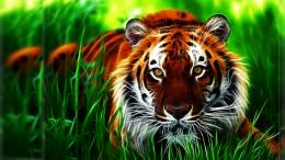 Tiger fractal face eyes pattern stripes grass art wallpaper background 845