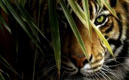 Tiger HD Wallpaper | Download Tiger Desktop HD Wallpaper | HD 874