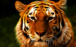 Wallpaper Tiger Face ArtHD Wallpaper Expert 1727