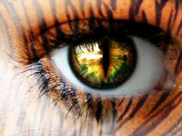 CarvedChapter two: Tiger eyesPage 1Wattpad 1206