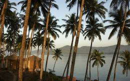 Palm trees and serenity lake wallpaper 903