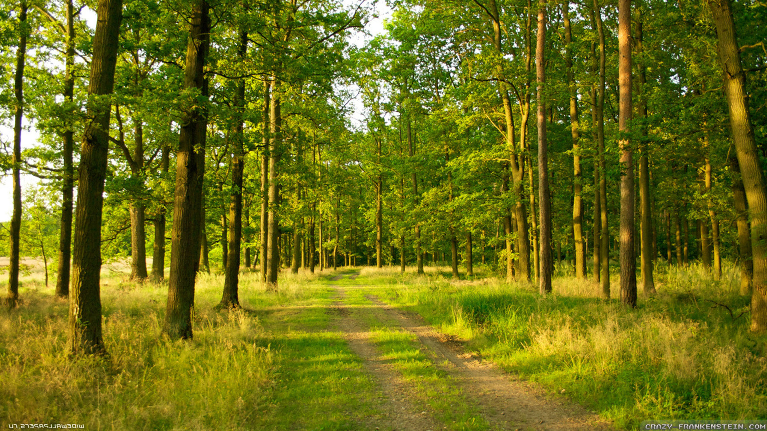 Peaceful Forest Backgrounds9 1724