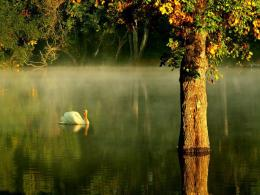 Perfect day reflection lake tree tranquil 1280x960 1782