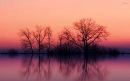 Perfect tree reflection in the calm lake wallpaperNature wallpapers 1271