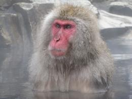 Snow monkeys and hotsprings 1752