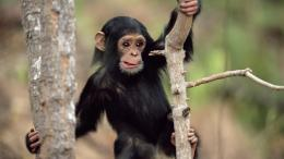 Monkey HD Wallpapers | Monkey Pictures Free | 368