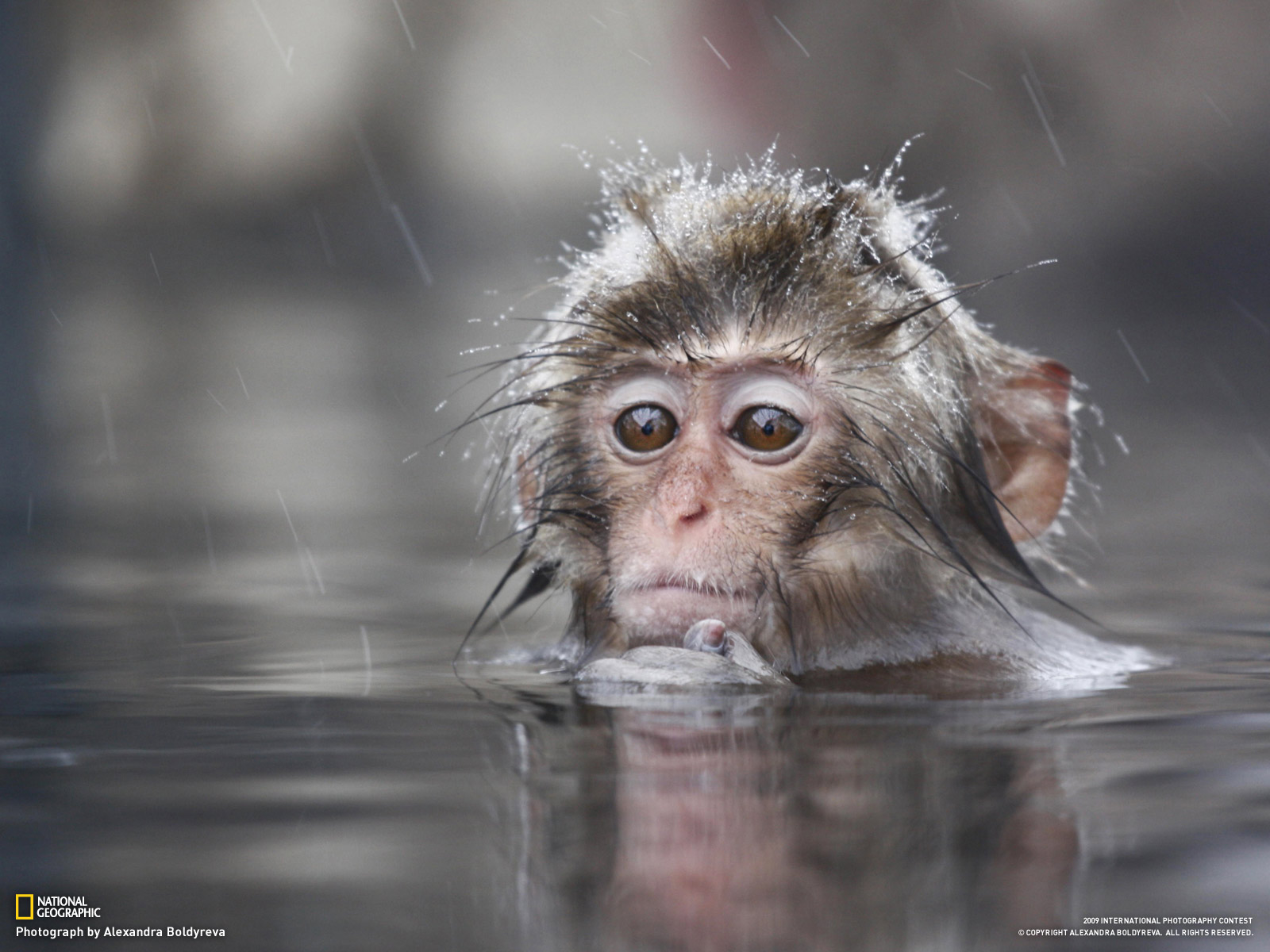 Nature wallpaper: Baby Monkey Wallpapers, Monkey Baby Funny Wallpapers 1229