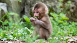 Cute And Beautiful Monkey Wallpapers In HDWallpapers And Pictures 1364
