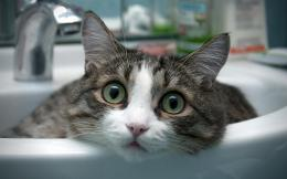 Little Cat In Hand Sink Hd Wallpaper | Wallpaper List 787
