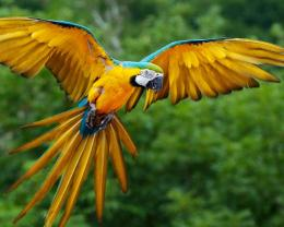 download parrot flight wallpaper in animals wallpapers with all 451