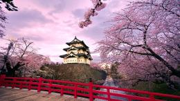 japan cherry blossoms blossoms temples japanese bridge 241