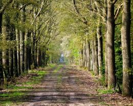 Road inside trees wallpaper 916