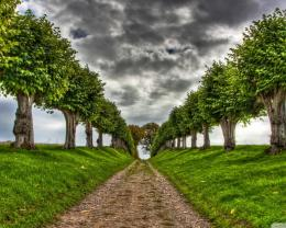 Download Tree on the road Boulevard wallpaper in Nature wallpapers 536