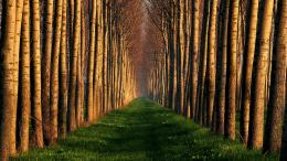 Path Of Trees Hd Wallpaper | Wallpaper List 319