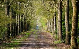 Road inside trees wallpaper 1541