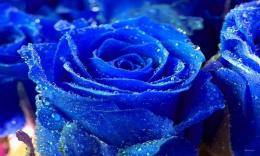 Beautiful Blue Rose Wallpaper HD Wallpapers & Backgrounds Beautif 759