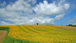 Japan Hokkaido Country Field : Open Field Under Sky1920x1080第12 1447