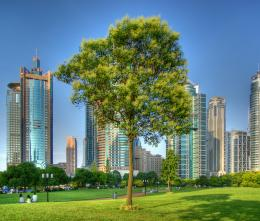 CHINAShanghaiLone tree surrounded by skyscrapers HDR by Franck 1942