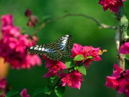 Butterfly and flowers red green nature 1280x960 1866