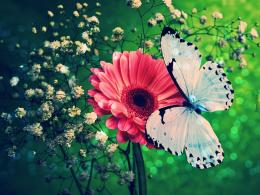 Flower & Blue Butterfly Wallpaper World Wallpaper Collection 1234