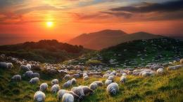 Download Sheep and Volcanoes wallpaper in Nature wallpapers with all 277