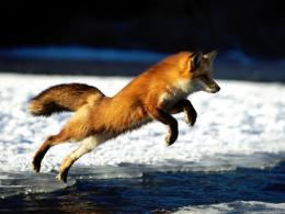 Aug 14, 2011Animals Wallpapers 1050