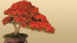 Bonsai Wallpaper 07 – HD Wallpaper, Wallpaper PicsThe Best 281