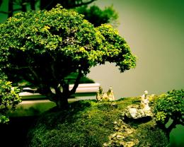 Bonsai Naturex HD behang 1920x1200 800x600 1024x768 1920x1080 1366x768 1462