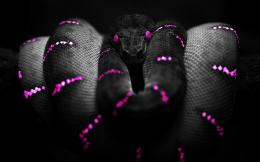 Photoshop Snake Purple HD Wallpaper 1359