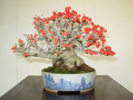 Download free Flowring Bonsai Tree desktop wallpaper hd for mobile 1531