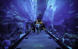 Dubai Aquarium Hd Wallpaper | Wallpaper List 1439