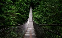 Suspension bridge in the forest | Widescreen and Full HD Wallpapers 1009