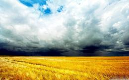 Wheat field after a storm hd wallpaperHD WallpapersDownload HD 1047