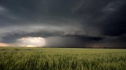 Download Distant storm over wheat field wallpaper in Nature wallpapers 470