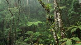 Montane Rainforest, Mount Kinabalu National Park, Borneo 1490