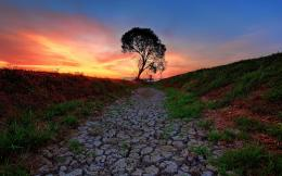 Path Tree Sunset wallpapers | Fields Stones Path Tree Sunset stock 1540