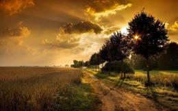 Field Path Trees Sunset wallpapers | Wheat Field Path Trees Sunset 1652