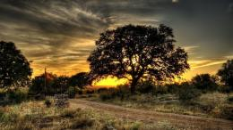 Path Sunset wallpapers | Farm Gate Trees Path Sunset stock photos 1904