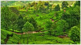 Munnar Tea Plantations Kerala PC, Android, iPhone and iPadWallpapers 1106
