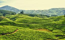 Daily Wallpaper: Tea Plantation in Kerala, India | I Like To Waste My 118