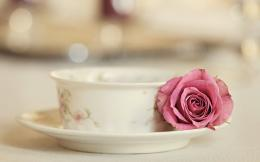 Rose with Tea Cup | HD Wallpapers 1687