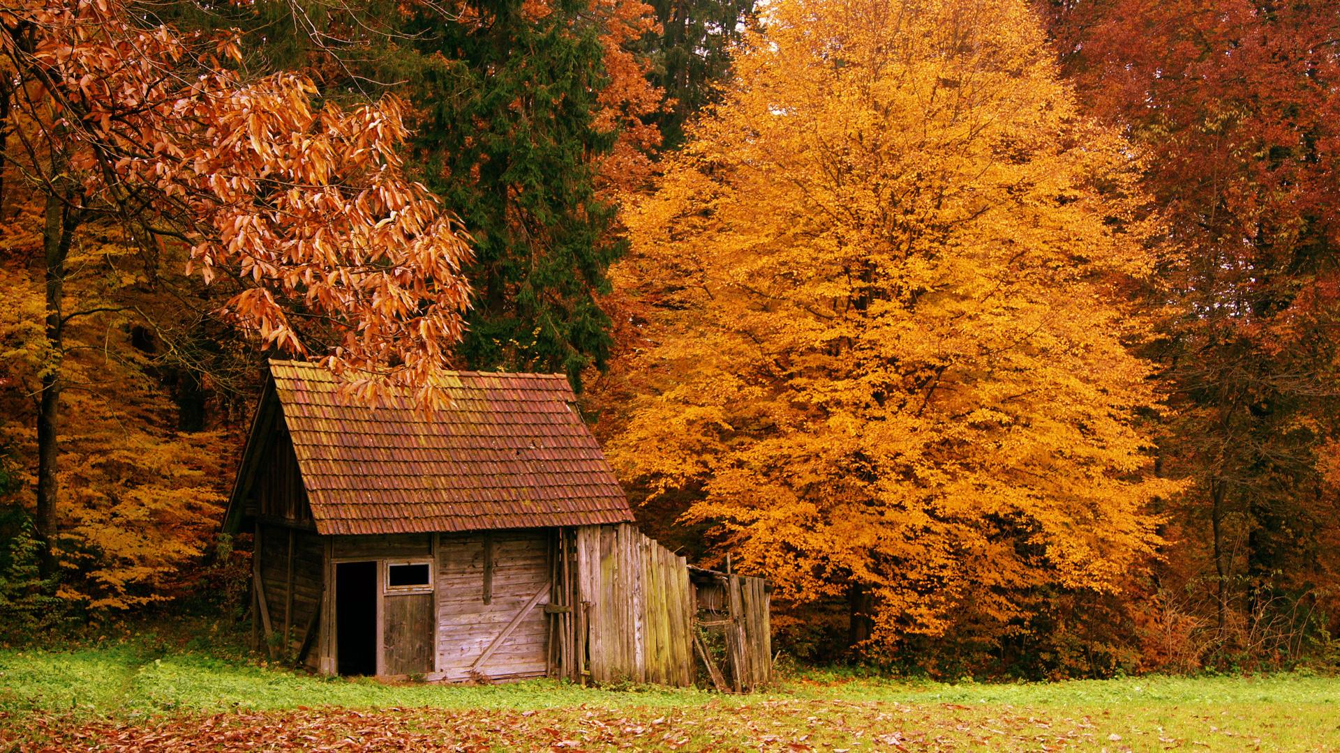 The Cabin In The Autumn Woods Hd Wallpaper | Wallpaper List 151