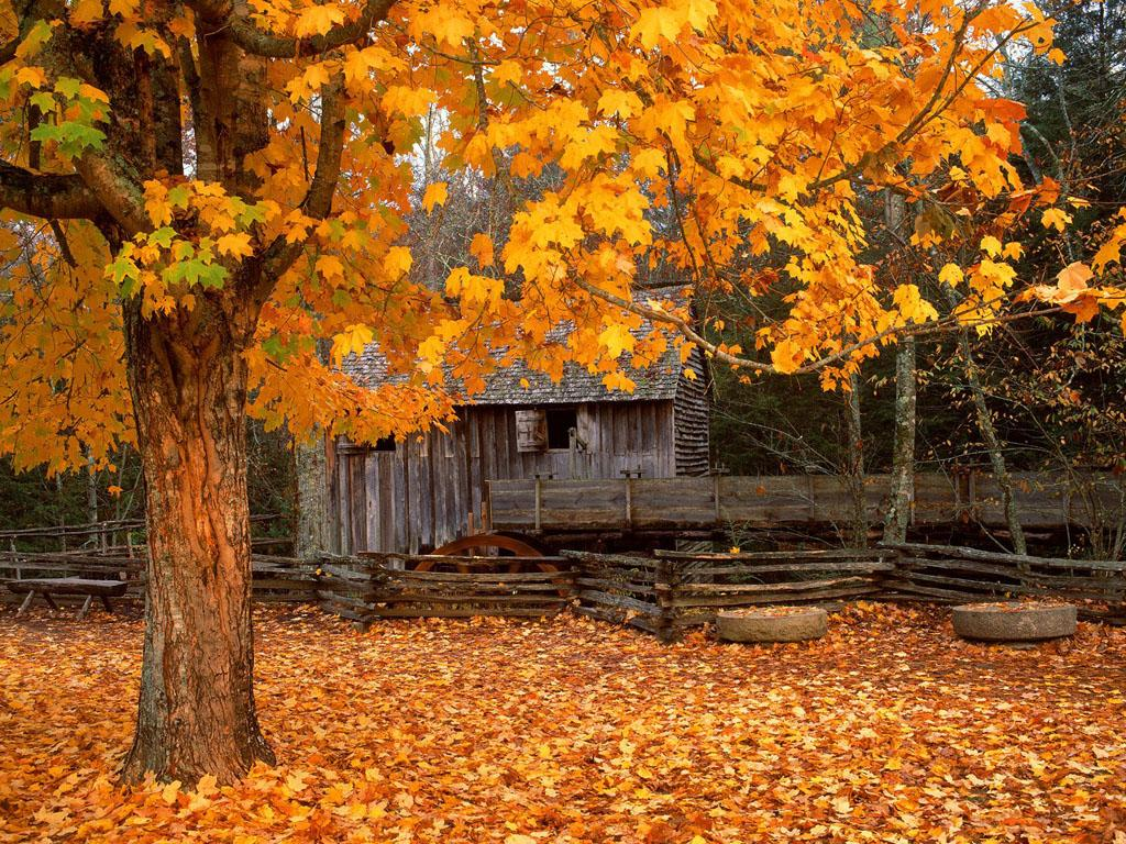 Cabin The Woods Golden Autumn Leaves Fences hd wallpaper #182982 254