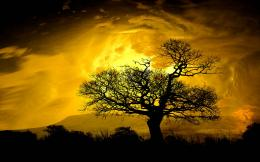 sunrise glow and clouds over hill silhouette tree nature 235