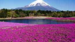 Mount Fuji Spring WallpaperTravel HD Wallpapers 822