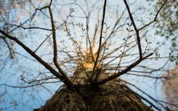 trees depth of field worms eye view branches low angle shot wallpaper 1144