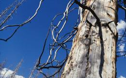 Dead tree close up wallpaper Desktop Background | Scenery Wallpapers 975