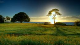 Beautiful Nature Wallpapers for Background HD Wallpaper jpg 1169