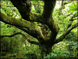 The Grand Old Oak Tree by Estruda on DeviantArt 999